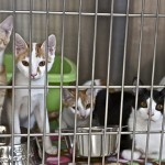 Pet Adoption at Canadian Vet Clinic in Doha